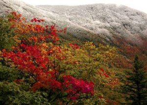New Englands fall foliage meets with an early snow in Franconia , N.H., Thursday, Oct. 1,2009.