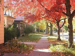 Fall day - Urbana, Ill.